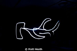Flashlight Photography of a Hammerhead by Matt Heath